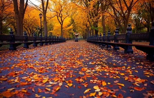 Аллея в парке осенью