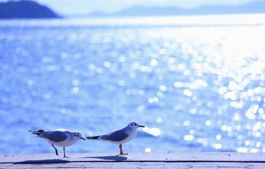 Фотообои чайки у моря