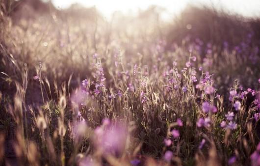вид травы в поле