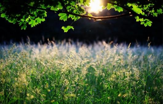 трава в солнечном свете