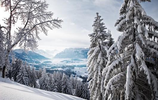 лес в горах зимой