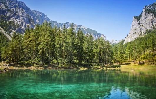 елки у озера