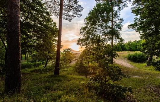 лес при восходе солнца