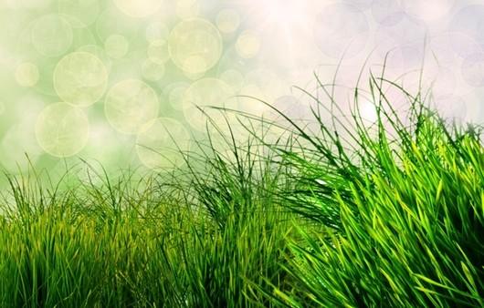 Фотообои зеленая трава