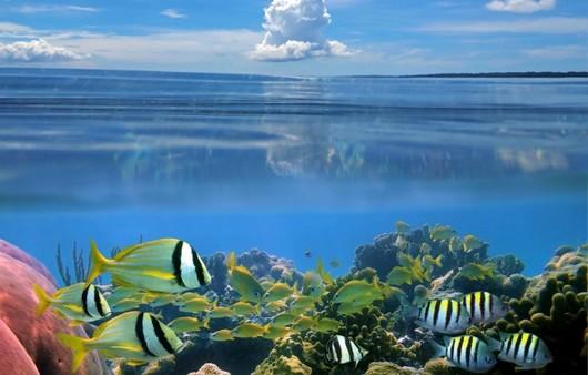 рыбы на морском дне