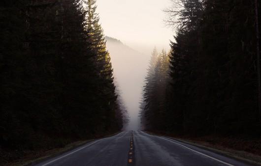 дорога вдоль лесов