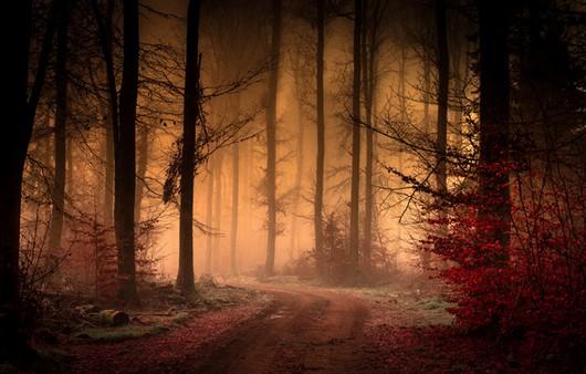 Фотообои осень — дорога по лесу