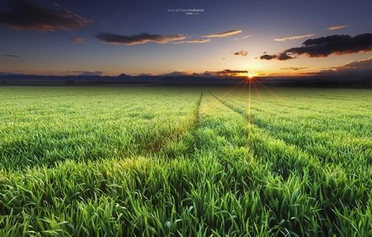 Лучи солнца в поле