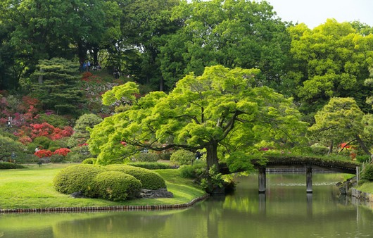 японский сад в Токио