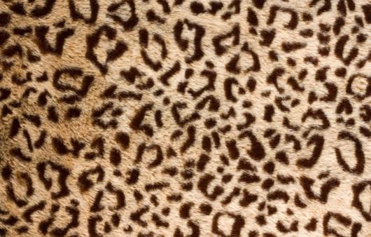 леопардовая текстура