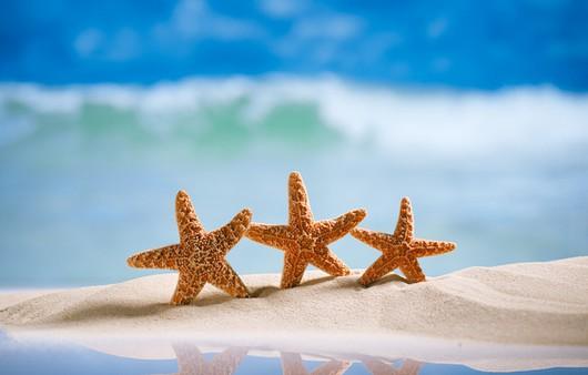 звездочки морские