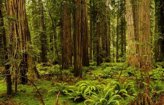 американский лес