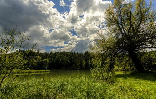Фотообои обычный лес