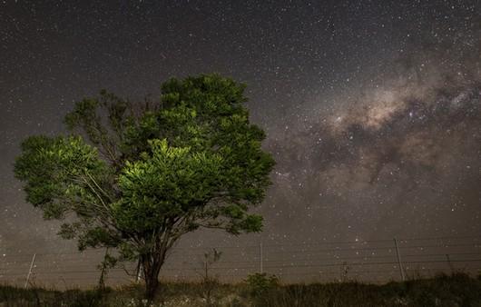 Фотообои ночь в Африке
