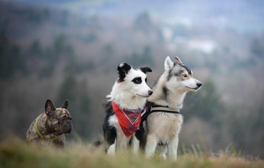 псы в горах