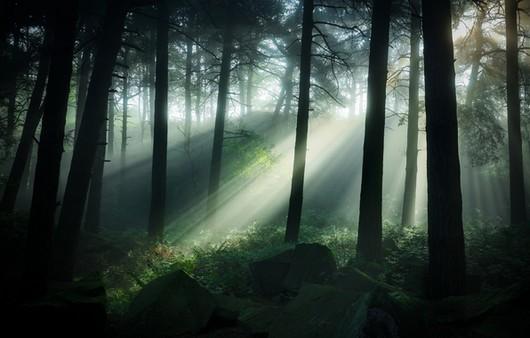 Лучи солнца проходят сквозь деревья