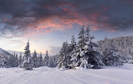 Утренний рассвет в зимнем лесу