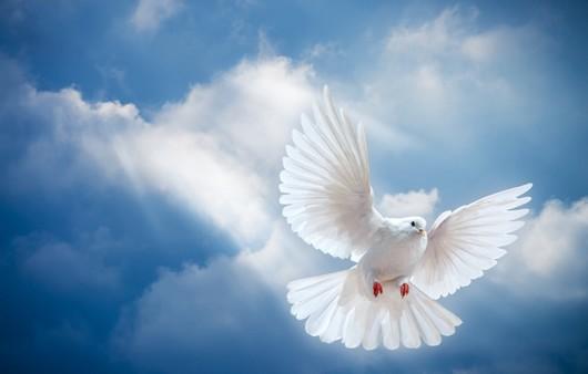 Белый голубь спустившийся с небес