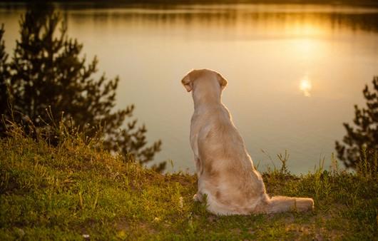 Одинокий пёс смотрит вдаль