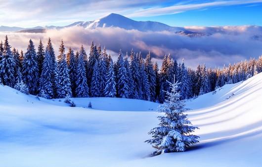 Зимний лес и горы