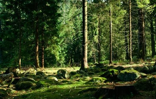Фотообои Деревья и камни