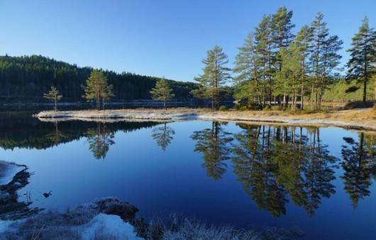 Фотообои Чистая река и деревья