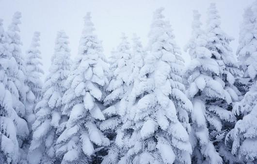 Фотообои Снежные деревья