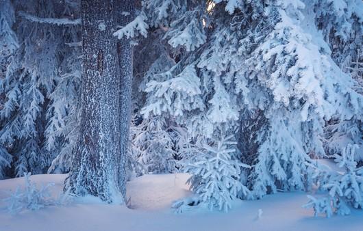 Снежный покров