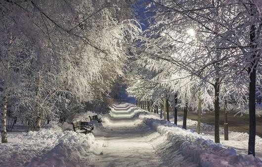 Фотообои Аллея засыпанная снегом