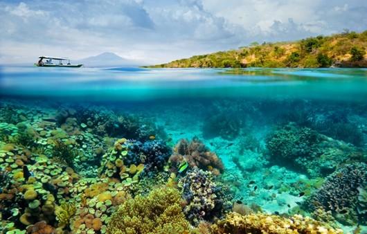 Лазурное море с кораллами