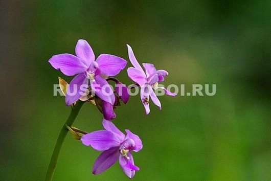 Фотообои Лесная орхидея