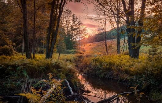 Фотообои Осенний лес и река