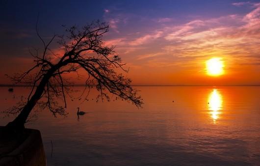 Силуэт дерева на фоне заката