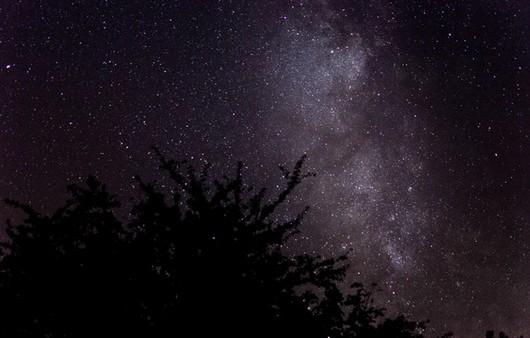 Силуэт дерева на фоне звездного неба