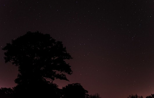 Силуэт дерева на фоне ночного неба