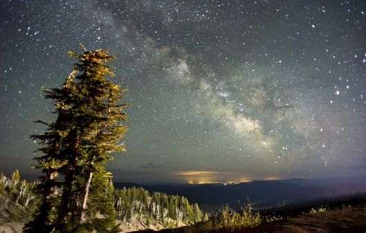 Фотообои Дерево на фоне звездного неба