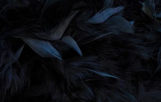 Текстура с перьями