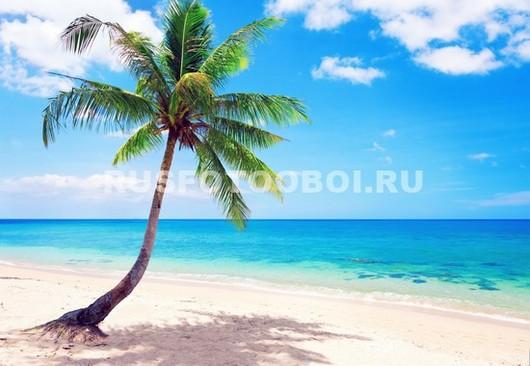 Одинокая пальма