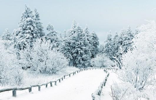 Фотообои Пейзаж зимнего леса