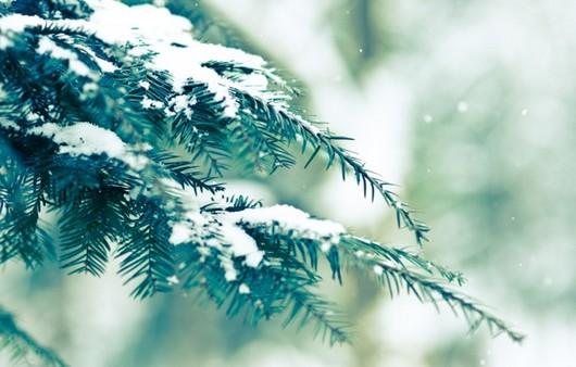 Фотообои Ель в снегу