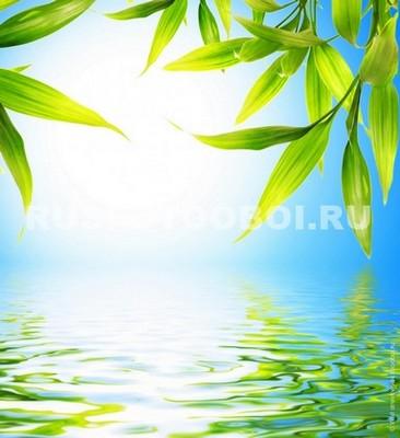 Листья над озером