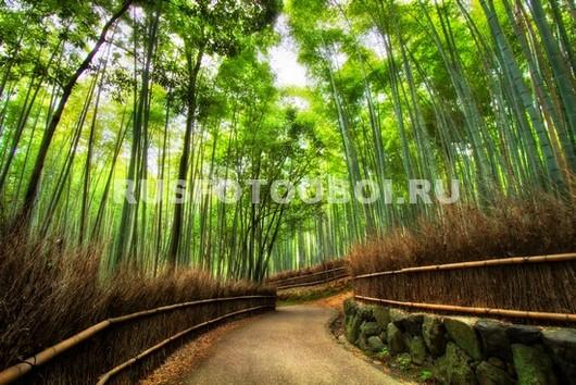 Дорога сквозь бамбук