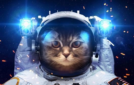 Фотообои Кот в скафандре
