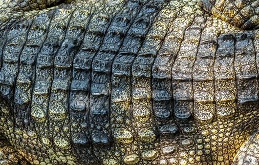 Текстура из крокодиловой шкуры