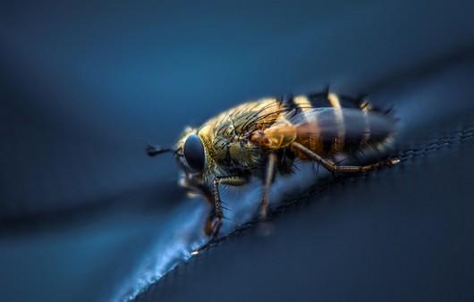 Пчела в макросъемке