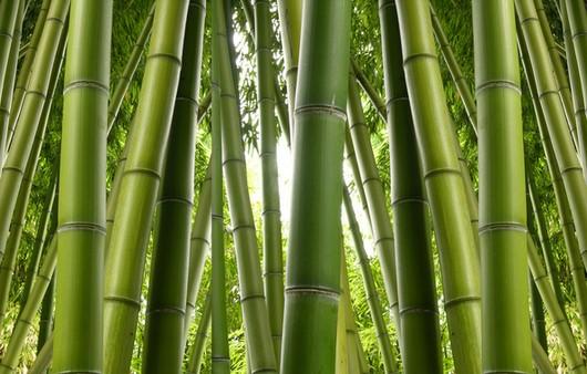 Текстуры с бамбуковыми тростниками