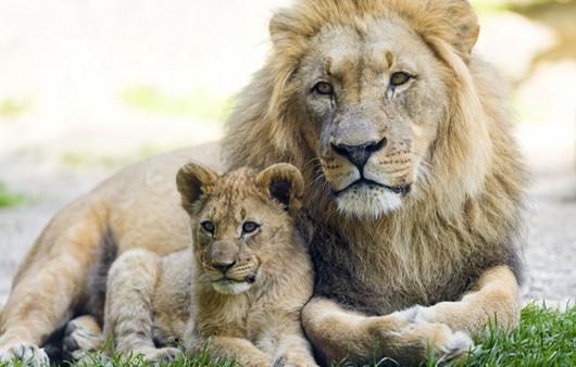 Львица и её детеныш