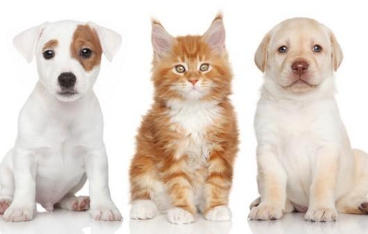 Забавные щенки и кот