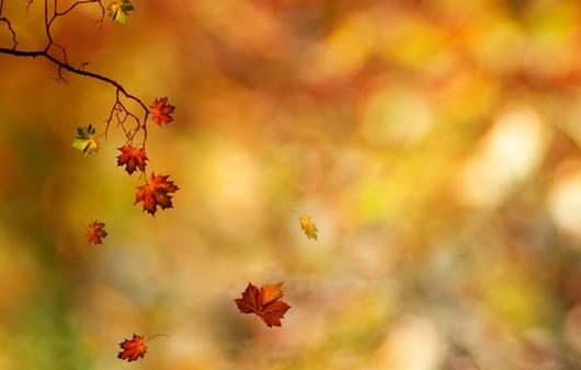 Осенние листья в макросъемке