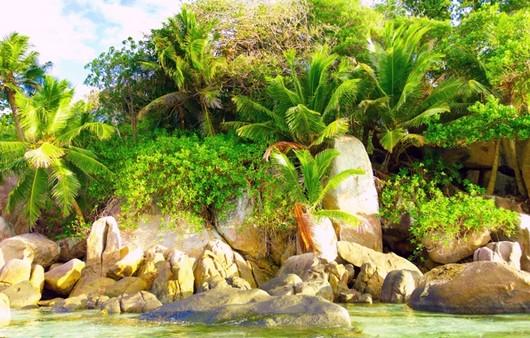 Тропики и река